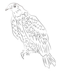 Sketch of eagle