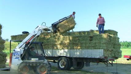 Farmers Loading Hay 02