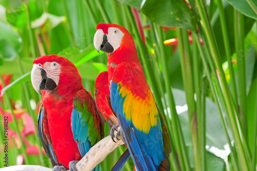 bright large tropical parrots sit on a branch