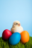 Easter eggs and chickens on green grass on blue background