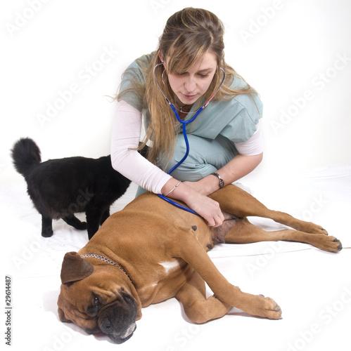 #11 Doit-on changer daliment pour une chienne qui