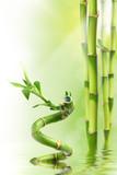 Fototapety Bamboo I