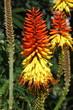 Tropical Flor