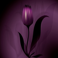 Flower mysterious background Tulip
