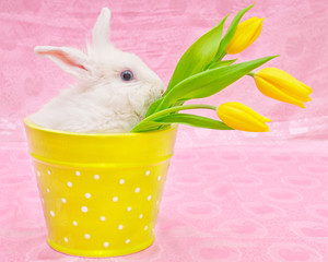 rabbit and yellow tulips