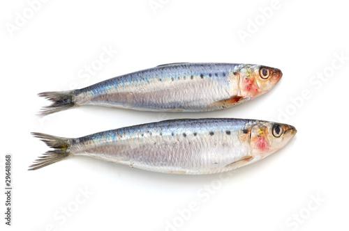 Fresh sardine fish - 29648868