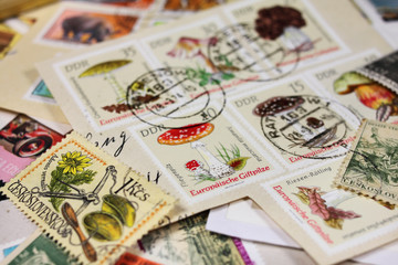 Briefmarke mit Fliegenpilz