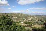 Olive trees from Sta Lucia viewpoint Ubeda Andalusia Spain poster