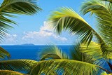 tropical melody