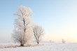 Frosty winter tree in the field in a cloudless morning