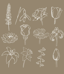 many different flowers vector collection
