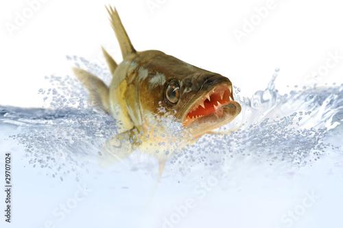 ryby-48