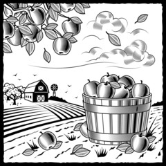 Landscape with apple harvest black and white