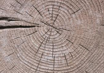 Wachstumsringe, alter Baumstumpf