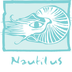 Nautilus in Blue