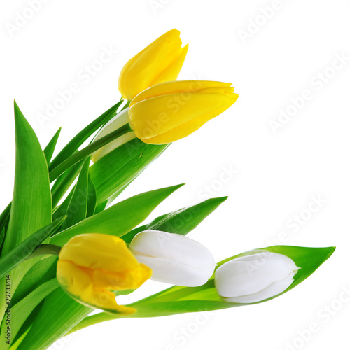 bouquet of tulips on white isolated background