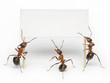 team of ants holding blank, message, placard or billboard