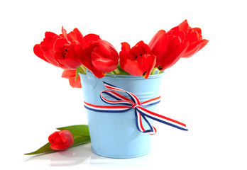 blue bucket with red tulips over white background
