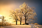Fototapety Ice and Frost Covered Oak Tree in Cold Winter Snow