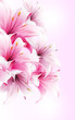 Lilies flower vector