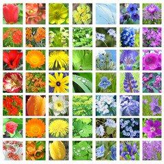 Flower collage in rainbow colors with white frames