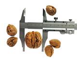 trammel – precision choice, big walnut poster