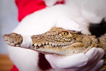 Santa with Croc