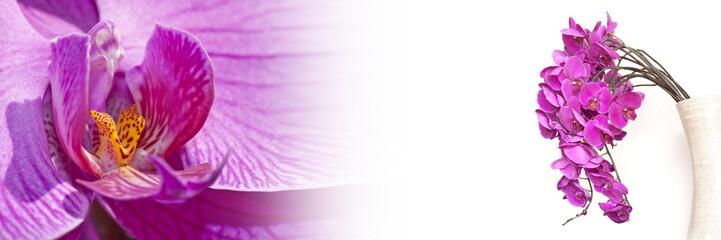 Bannière orchidée rose