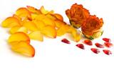 Rosenblüten, Blütenblätter und Herzchen