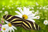 Schmetterling 102