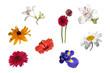 Sammlung Blumen