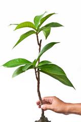 safe the plant