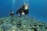 scuba divers decend on to dive site poster