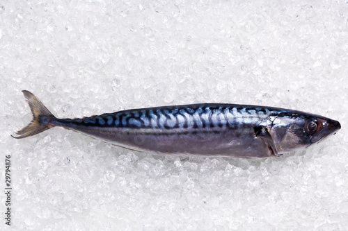 Mackerel on crushed ice