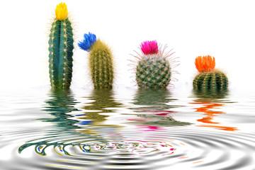 4 mini Cactus (Cactaceae) floodés