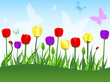 Tulips, butterflies and lady birds background. Vector