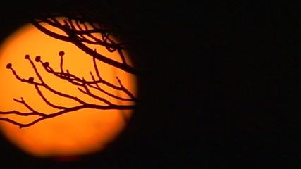 Sole - Panoramica verso destra