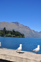 Gulls on the beach in Queenstown, New Zealand