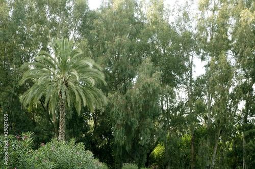 zielona-natura-z-drzewkiem-palmowym-i-drzewami-eukaliptusowymi