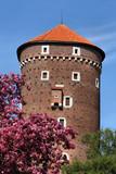 Wawel in spring poster