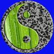 yin yang pierre et palmier, fond bleu