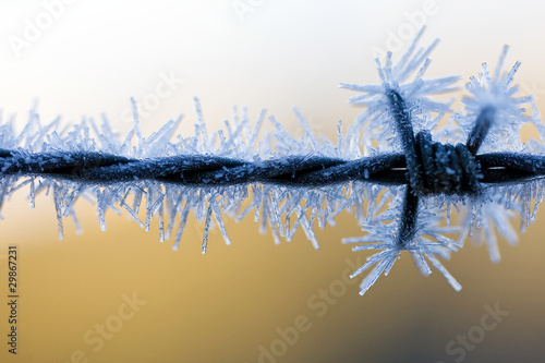 icy barbed wire