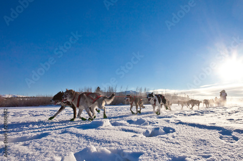Dog team pulling sled