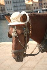 Pferd mit Hut