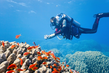 Photographer on the coral reef