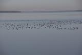 Seasonal duck migration poster
