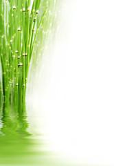 Bambous et reflets dans l'eau