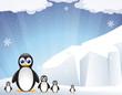 Family of amusing penguins
