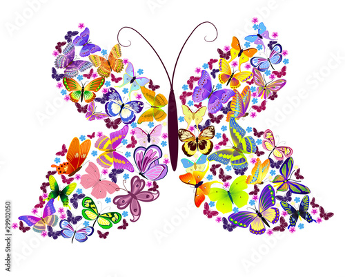 Butterfly of butterflies