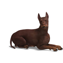 Doberman Dog. 3D rendering with clipping path and shadow over